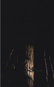 v lesy